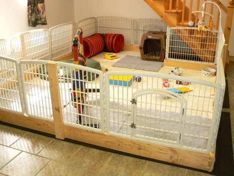 Herdabout shelties reg 39 d breeders of shetland for Diy dog bathing system